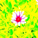 Imagequaltester002