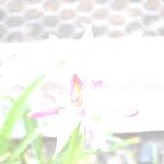 Imagequaltester001